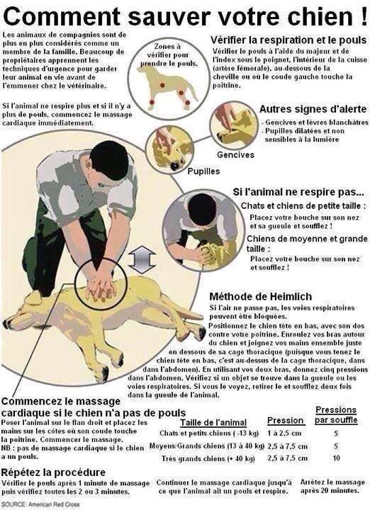 Bon À savoir, Sa peut sauve un chien ou un chat !