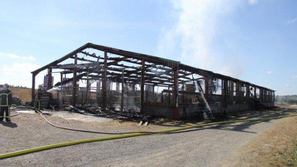 Faits divers. Hier 203 veaux périssent dans l'incendie d'un hangar agricole