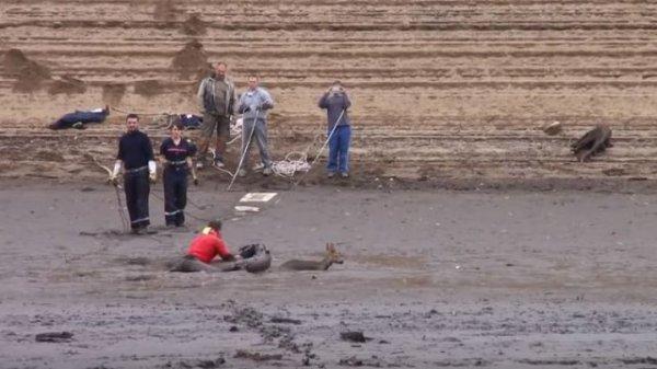 #Insolite : Les pompiers du Tarn sauvent un chevreuil prisonnier d'un lac vidangé !