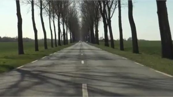 Des glissières pour se protéger des platanes le long des routes ?
