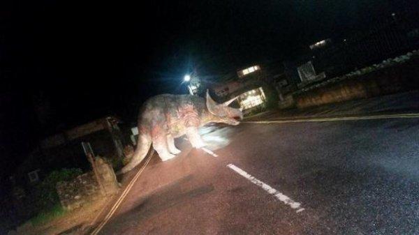 Insolite du jour : Au milieu de la route, il tombe nez à nez avec un... tricératops !!