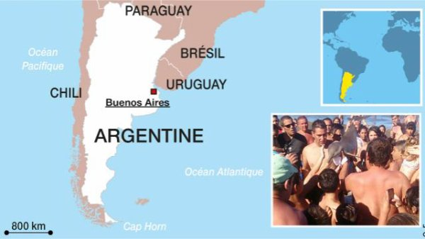 Argentine. Des touristes tuent un dauphin en faisant des selfies !!