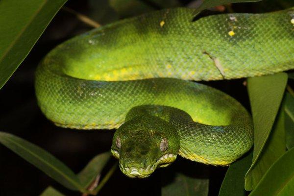 Les 50 espèces de serpents sont dépassées !!!!