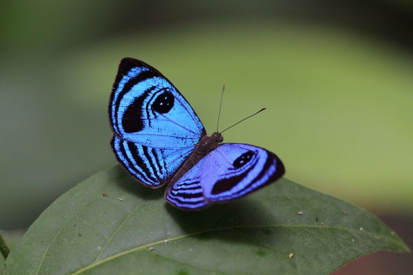 Papillon de forêt.