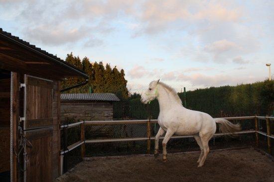"""""""Le cheval est pour l' homme comme les ailes pour l' oiseau"""""""