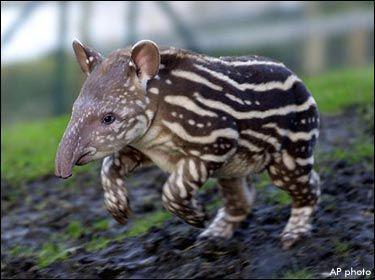 Bien connu les animaux en voie de disparition - tu les aimes ? alors aide les! PO14