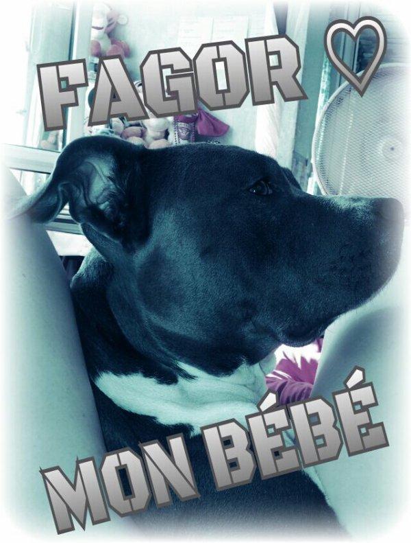 Mon Faaago ♥♥♥♥♥