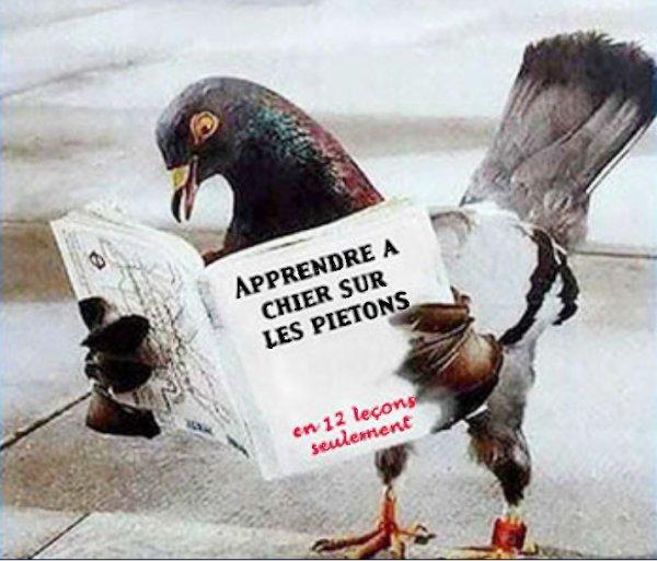 (58) 123Tablature-O-blog - skyrock.com - Tour de cartes - Roi de trèfle - le pigeon ou comment chier sur les piéton en douze leçons ?