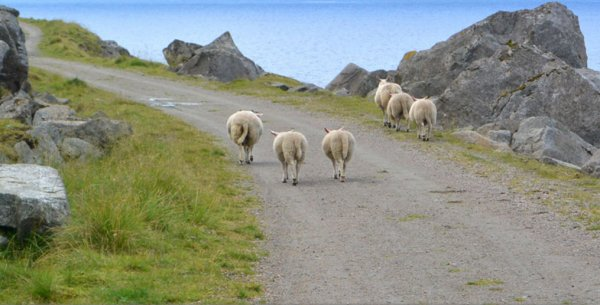 Animal crossing, (200), tablature.skyrock.com