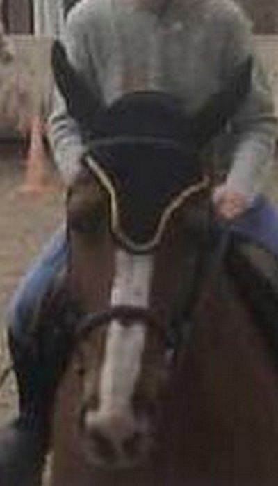 Photo du bonnet de concours porté