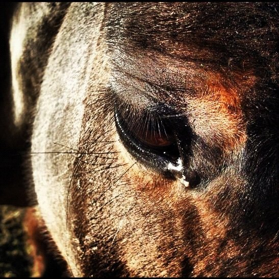 Mon cheval! Mon bonheur! Mon amour!