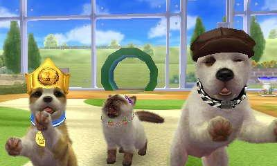 Mes Nintendog's+Cats...