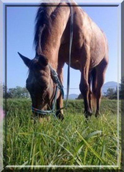 Pour parler à un cheval, il n'y a pas besoin de mots