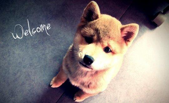 • Bienvenue