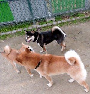 • Rencontre entre Donnie et sa soeur Ginko