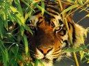 Photo de sos-animaux62730
