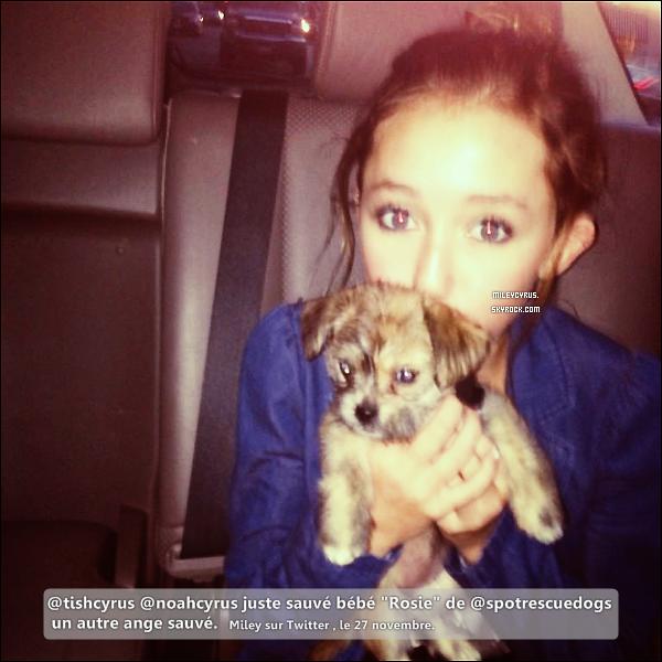. 26/11/2012- Miley, accompagnée de sa soeur Noah et sa mère Tish ont été vu dans un magasin pour animaux à Los Angeles. Noah, a adopté un chiot qu'elle a appelé Penny Lane. .