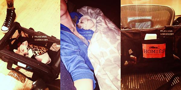 .  04/01/2013- Mileyet Cheyne se rendant au studio à Burbank, avec dans la main son chien, Bean.  .