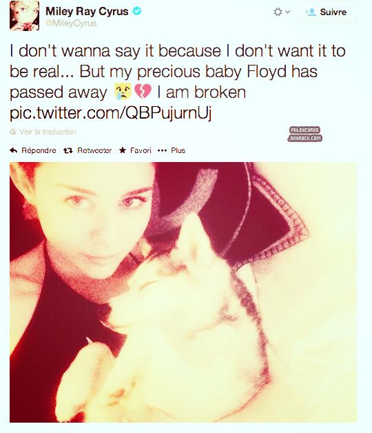"""Floyd le chien de Miley est mort !!!! Elle a écrit un mot sur twitter à ce sujet. """"Je ne veux pas le dire parce que je ne veux pas que ce soit vrai ... Mais mon précieux bébé Floyd est mort. Je suis brisée"""""""