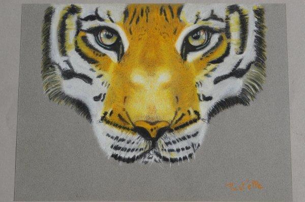 tigre 24*32