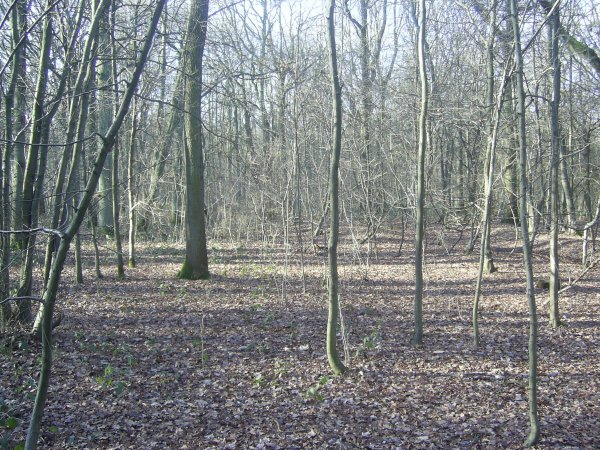 Rando du 16/01/2011 - La forêt de Phalempin