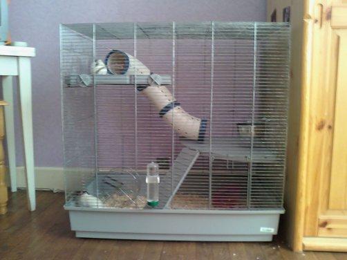 J'ai enfin la cage Jenny =D