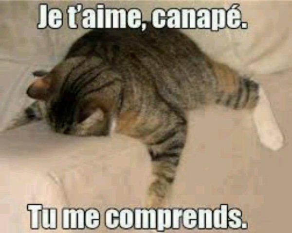 I ♥ canapé