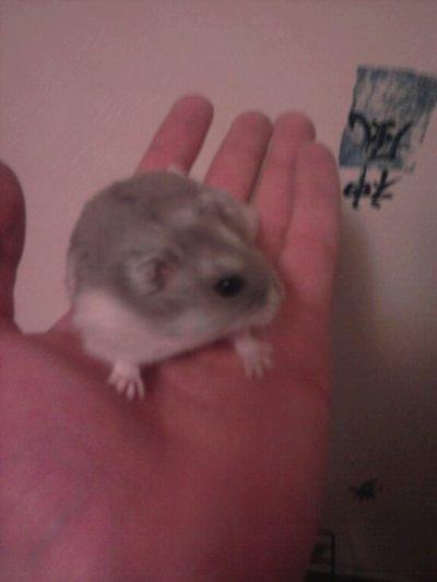 °° Sa c'est mon hamster °°