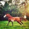 equestrianDIRECTORY