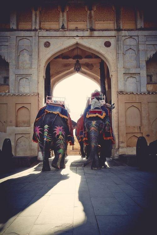 Un jour je ferai une balade sur un dos éléphant ♥