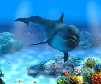 Beau Dauphin dans les eaux profondes.