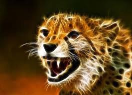 Un beau guépard.