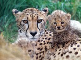 La mère avec ses petits dans l'herbe