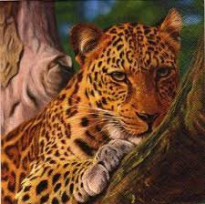 Un beau guépard qui se repose