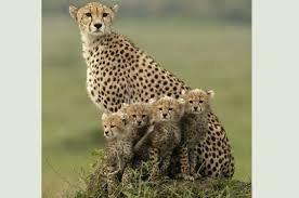 La mère avec ses petits