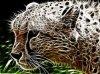 Un guépard qui guète