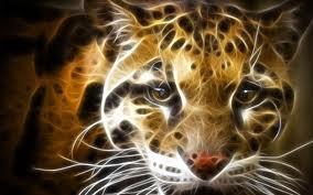 le regard d'un guépard
