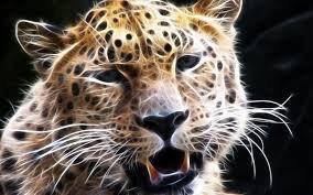 Un petit grognement du guépard