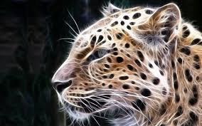 Le regard fixe du guépard