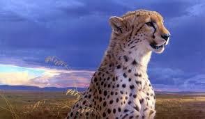 le guépard en mode guéteur
