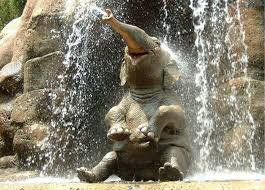 Un éléphant qui prend sa douche