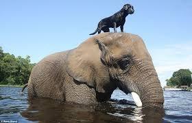 Un éléphant qui se baigne avec son amis le chien