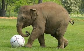 Un éléphant qui joue avec le ballon
