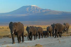 Un troupeau d'éléphant qui cherchent un nouveau coin appaissant