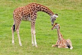 Une mère qui donne un bisous à son petit