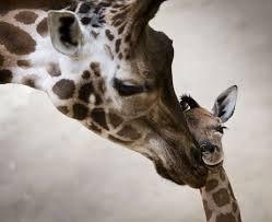 La mère qui donne des calins à son petit