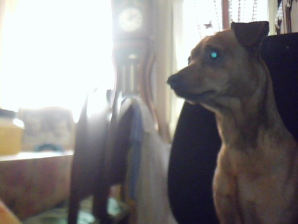 mon chien filou