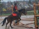 Photo de chevaux10