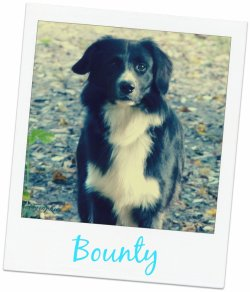Repertoire du Border Collie