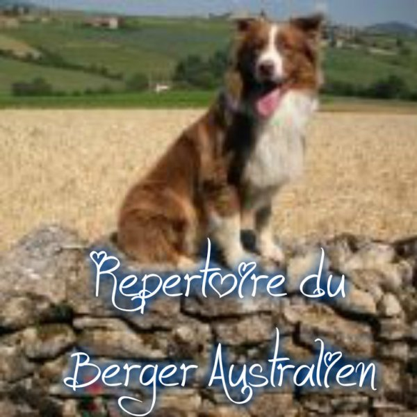 Repertoire du Berger Australien